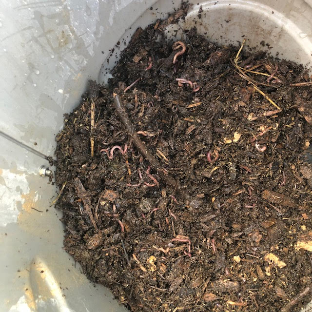 Thriving Worms